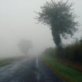 brouillard.png