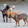 meute-de-chiens.png